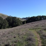 Break off from Oyster Pt. Trail in search of Jackass Canyon